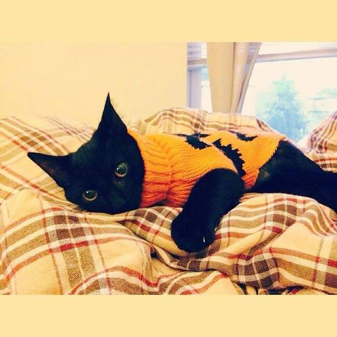 Halloween Sweater Cat