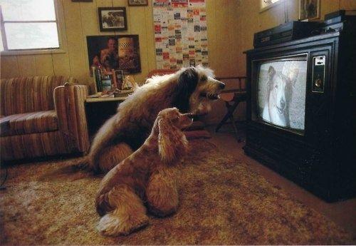 TV Watching Dogs (Image via BuzzFeed)