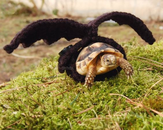 Batty Tortoise