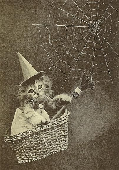 Witch's Kitten