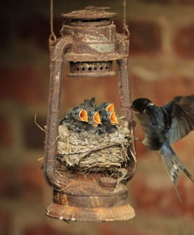 Lamp Birds (Image via Telegraph)