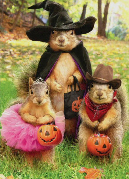 Trick-or-Treating Squirrels