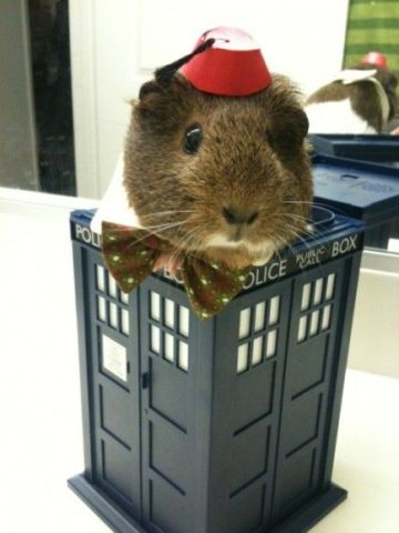 Doctor Who Guinea Pig
