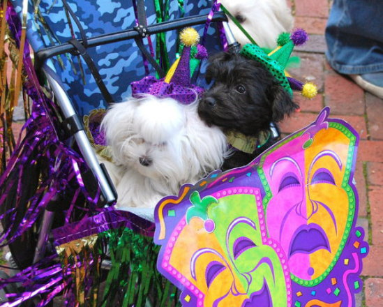 Thespian dogs at Mardi Gras Parade: photo by Dennis Pillion for Al.com