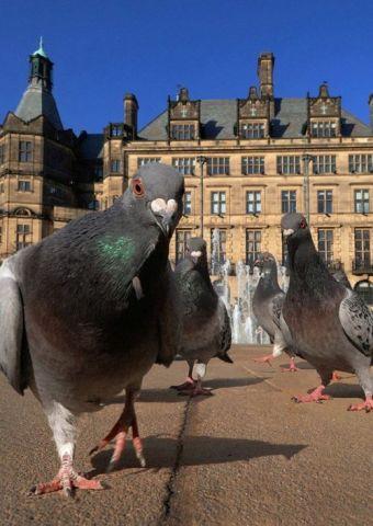 Gang of Pigeons