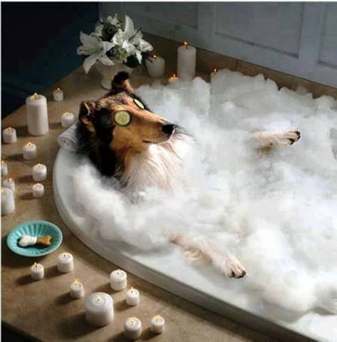 Bubble Bath Dog