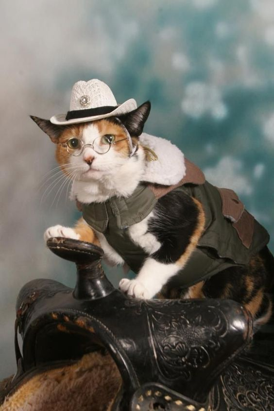 Kitty Sheriff