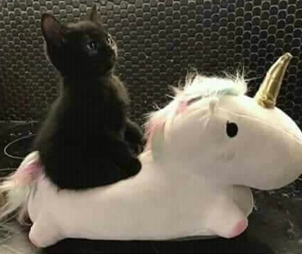 Kitten Riding a Unicorn