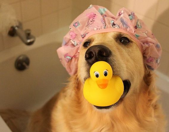 Dog Bath TIme (Image via imgfave)
