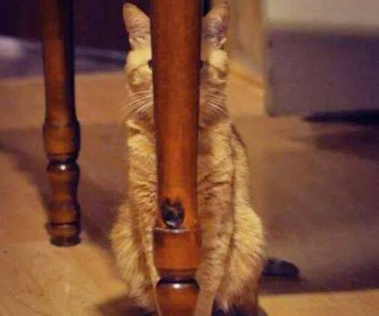 Hidden Cat (Image via Nothing but Kitty Cats)