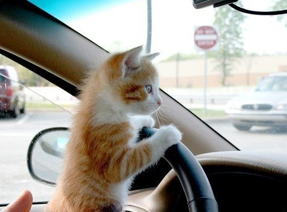 Car Kitten (Image via BuzzFeed)