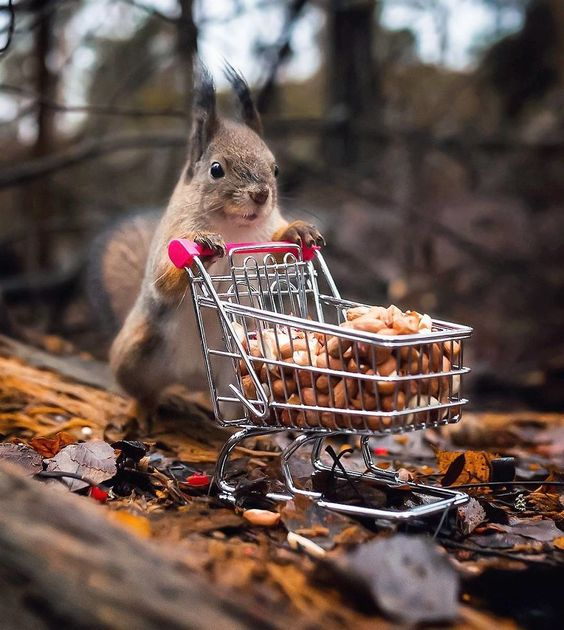 Shopping Squirrel