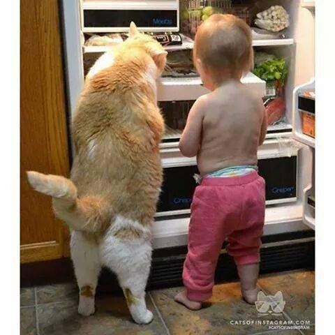Cat and Toddler