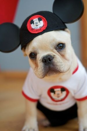 Mickey Mouse Mutt