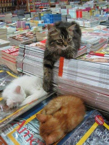 Bookstore Cats (Image via Love Meow)