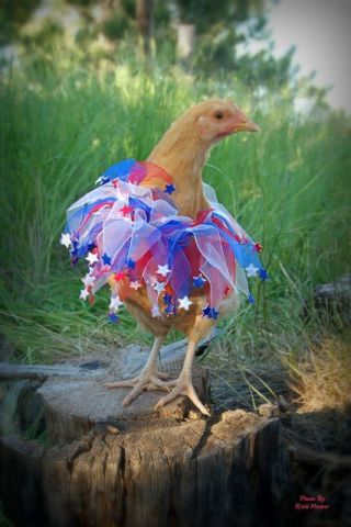 Fireworks Chicken (Image via Flickr)