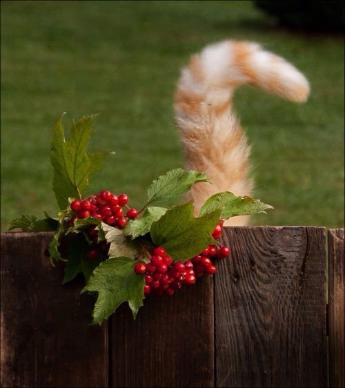 Christmas Cat Tail