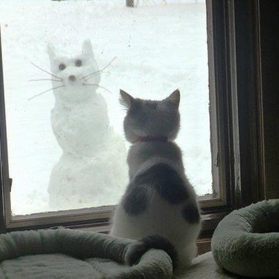 Cat Snowman (Image via Donkis)