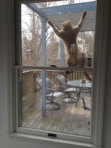 Clinging Cat (Image via eBoum's World)
