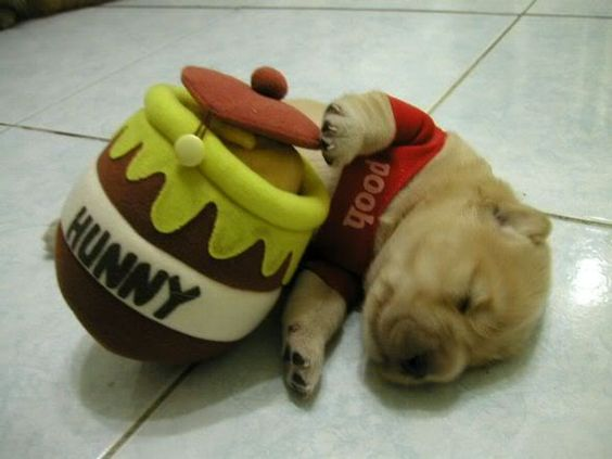 Pooh Puppy