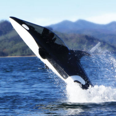The Killer Whale Submarine: by Hammacher Schlemmer