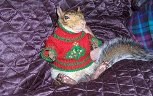 Christmas Sweater Squirrel