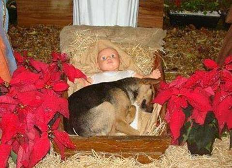 Savior Guard Puppy