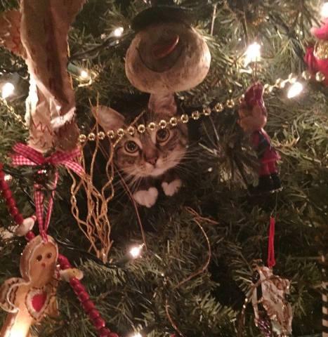 Elf-Stalking Cat