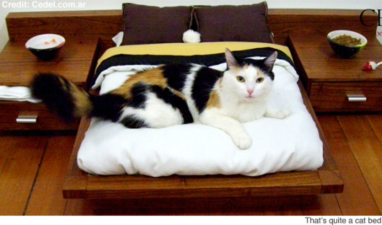 Cedel Pets & Style, Zen Model Pet Bed: image via newslite.tv