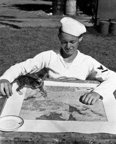 Pearl Harbor Kitten