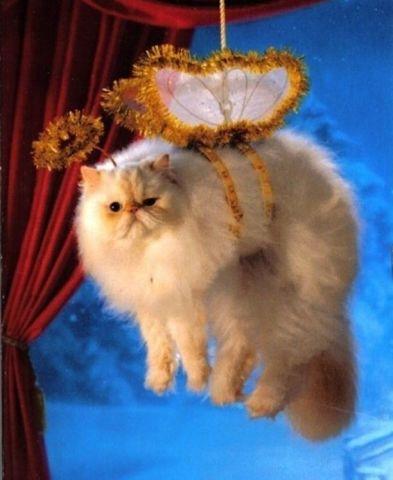 Cat Christmas Angel
