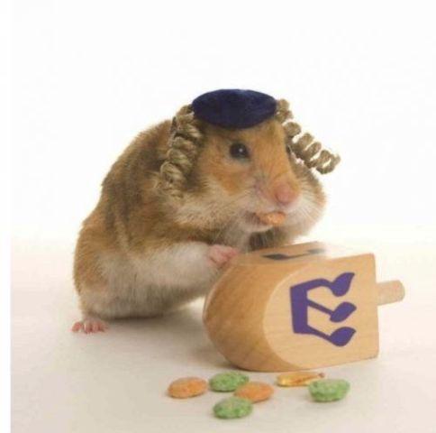 Hebrew Hamster
