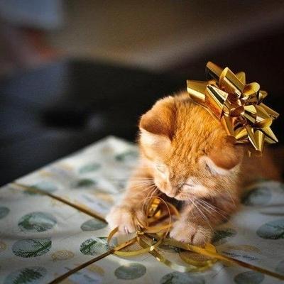 Wrapping Kitten