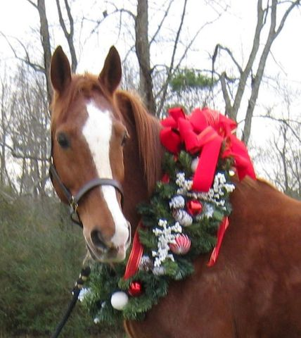 Wreathed Horse