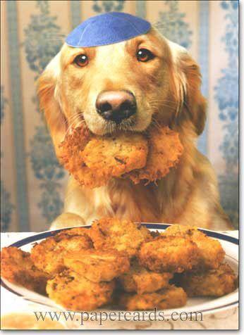 Latke Dog