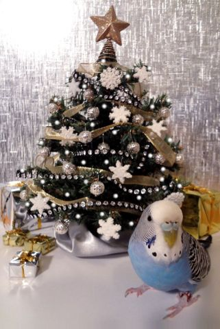 Christmas Budgie