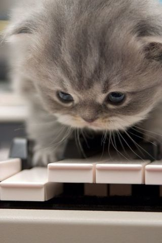 Beethoven's Birthday Kitten