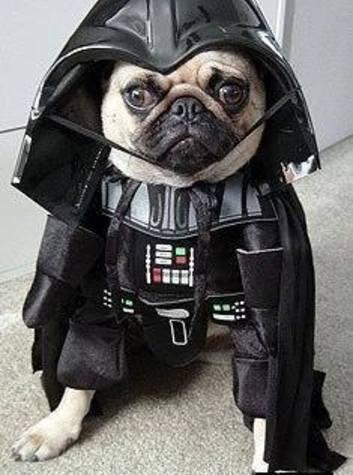Star Wars Darth Pug