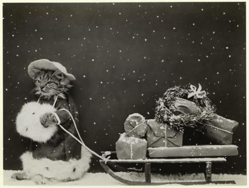 Vintage Christmas Cat