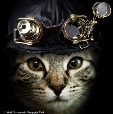Steampunk Cat (Photo by Mark Greenmantle/Image via tumblr)
