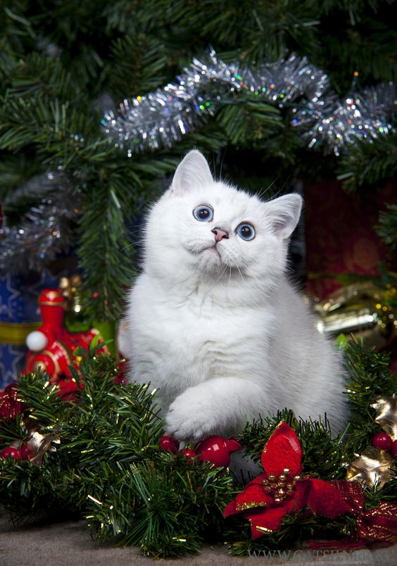 Kitten's First Christmas