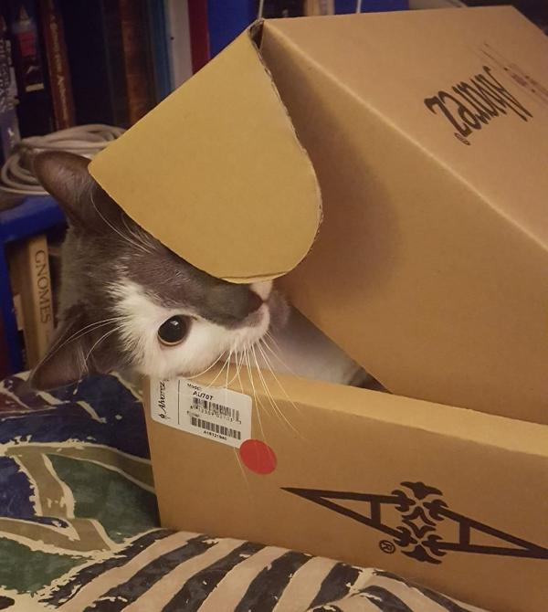 Boxed Up Cat