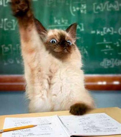 Questioning Kitten