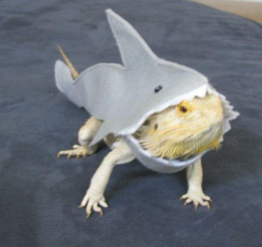 Lizard/Shark Hybrid (Image via Etsy)