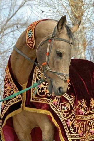 Handsome Horse (Image via tumblr)