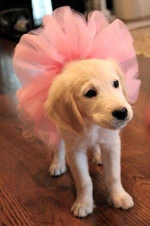 Tutu Puppy (Image via Cutest Paws)