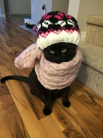 Bundled-Up Cat