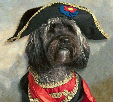 French Revolution Dog (Image via Mom.me)