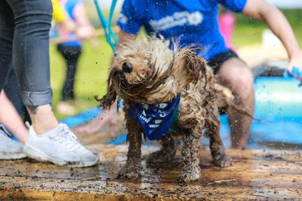 Muddy Dog Race 2016