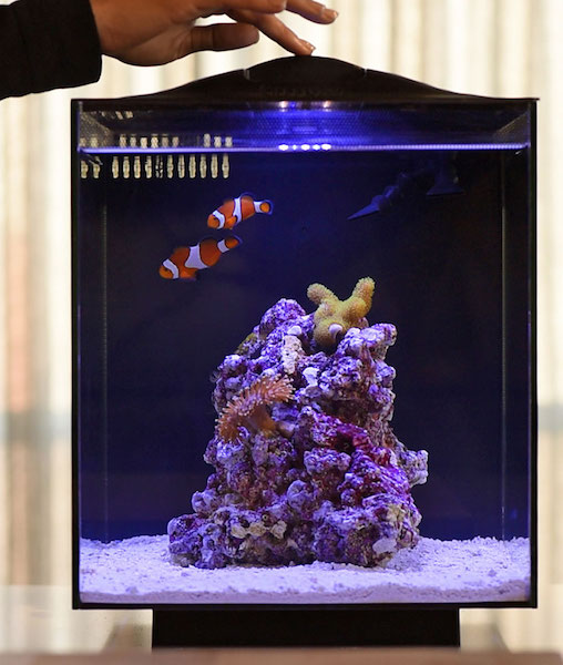 Simple Set Up Saltwater Aquarium